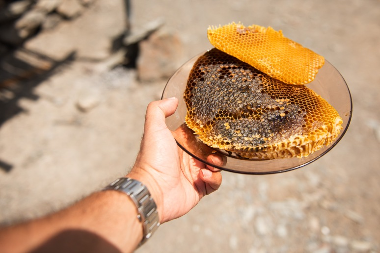 Holding disks of wax before the honey get's extracted from them
